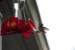 Птица припевать на фидере слишком стоковое фото rf