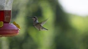 Птица припевать Стоковая Фотография