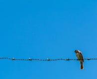 Птица & провод Стоковая Фотография