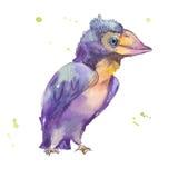 Птица пурпура акварели Стоковое фото RF