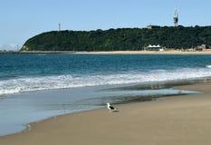 Птица пляжа Стоковые Фото