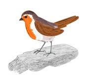 Птица Робина на каменном векторе Стоковое Фото