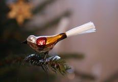 Птица рождества Стоковое Фото