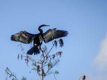 птица садилась на насест на верхней части дерева Стоковые Изображения RF