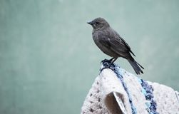 Птица садить на насест на стуле стоковое фото