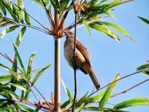 Птица садилась на насест на ветви бамбука Стоковое Изображение