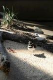 птица своя тень Стоковые Изображения
