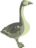 Птица серая гусыня Стоковая Фотография RF