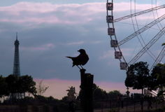 птица симпатичная Стоковое фото RF