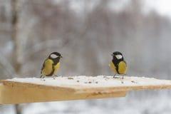 Птица синицы на фидере птицы в зиме Стоковая Фотография RF