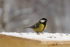 Птица синицы на фидере птицы в зиме Стоковое Изображение