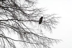 птица сиротливая Стоковые Фото