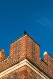 Птица сидя на верхнем парапете кирпичной стены здания Tudor Стоковые Изображения