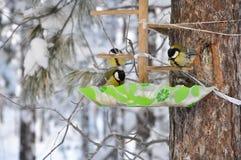 Птица сидя на ветви, ландшафт синицы зимы Стоковое Фото