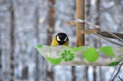 Птица сидя на ветви, ландшафт синицы зимы Стоковая Фотография RF