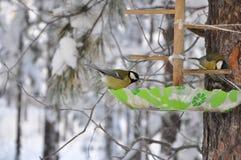 Птица сидя на ветви, ландшафт синицы зимы Стоковые Изображения