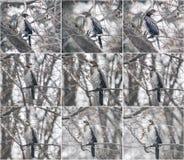 Птица сидя на ветви дерева Птица баклана сидя на дереве Стоковое Фото
