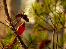 Птица сидя на ветви Стоковые Изображения