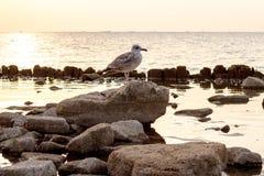 Птица сидя на заходе солнца утеса на заднем плане на море Стоковое фото RF