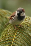 Птица сидя на лист Стоковые Фотографии RF