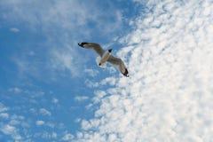 Птица скользя на голубом небе Стоковые Фото