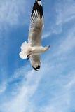 Птица скользя на голубом небе Стоковое Изображение