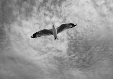 Птица скользя на голубом небе Стоковое Изображение RF