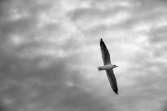 Птица скользя на голубом небе Стоковая Фотография