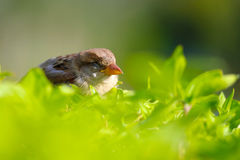Птица спать Стоковое Изображение RF