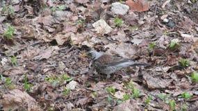 Птица среди листьев в лесе стоковое изображение rf