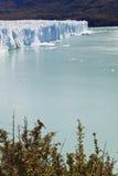 Птица стоя близко к леднику Perito Moreno. Стоковые Фото