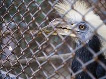 Птица съела плодоовощ в клетке стоковые изображения rf