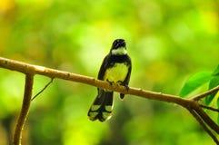 Птица с зеленой предпосылкой. Стоковая Фотография RF