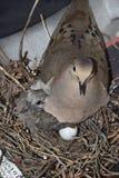 Птица с цыпленоком в гнезде Стоковое Изображение