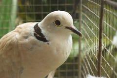 Птица с черной нашивкой Стоковые Изображения RF