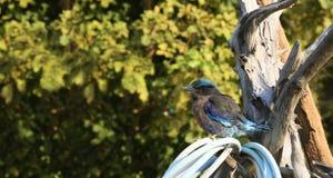 Птица ткача сидя на ветви стоковое изображение