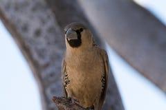 Птица ткача стоковая фотография rf