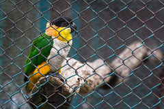 Птица тюрьмы стоковое фото rf