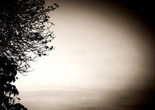 птица уединённая Стоковое Фото
