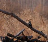 Птица; фамилия стоковое изображение