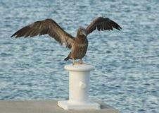 птица хлопая свои крыла стоковая фотография rf