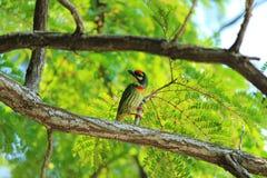 птица цветастая Стоковое Фото