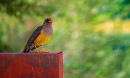 птица цветастая Стоковые Изображения