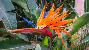 Птица цветка рая стоковое изображение