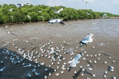 Птица чайок на море Bangpu Samutprakarn Таиланде Стоковые Фото