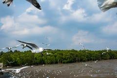 Птица чайок на море Bangpu Samutprakarn Таиланде Стоковое Фото