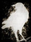 птица черный halloween Стоковая Фотография RF