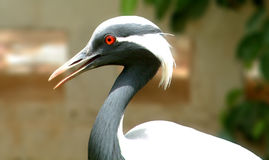 птица экзотическая Стоковые Изображения RF
