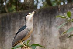 птица экзотическая Стоковая Фотография