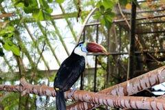 птица экзотическая Стоковые Изображения